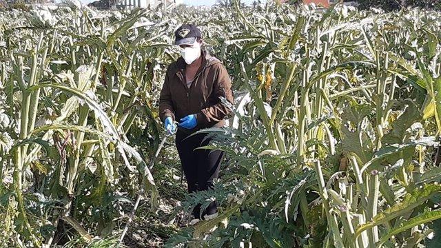 Coronavirus.- Asociación de mujeres rurales defiende el trabajo de las agriculto