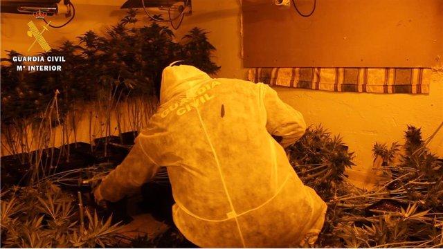 Marihuana decomisada en el barrio de Almanjáyar de Granada