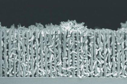 Bacterias cyborg pueden transformar el CO2 en componentes orgánicos