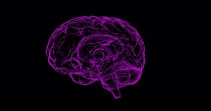 Descubren cómo la dopamina impulsa la actividad cerebral