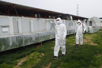 Coronavirus.- China suma un nuevo día sin contagios locales de coronavirus y confirma 35 importados