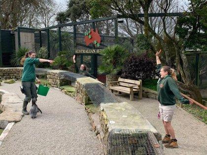 Trabajadoras de un zoo de Reino Unido se autoaislan tres meses en para cuidar de los animales