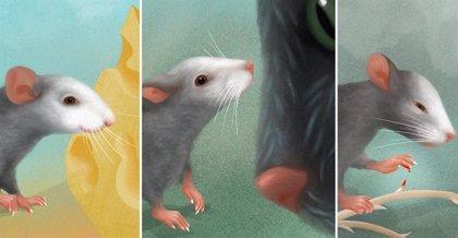 Identifican expresiones faciales emocionales en ratones