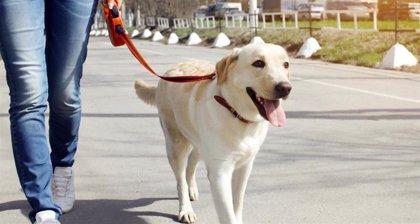 Expertos en diagnóstico veterinario no observan casos de Covid-19 en mascotas hasta la fecha