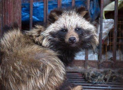 La campaña de Igualdad Animal que exige la prohibición de mercados de animales vivos recoge 50.000 firmas en 24 horas