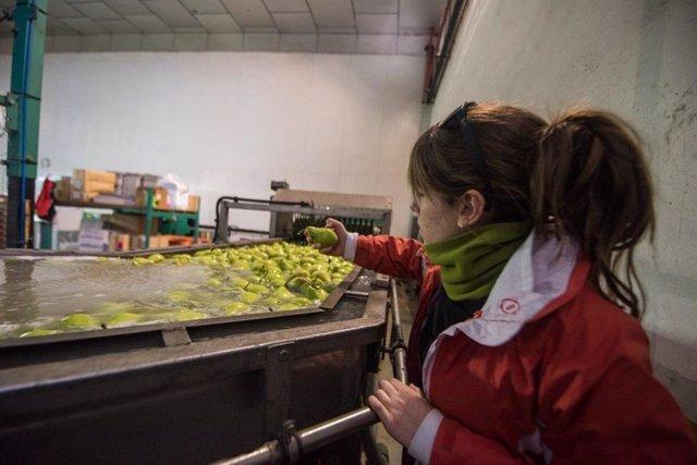 Trabajador industria alimentaria