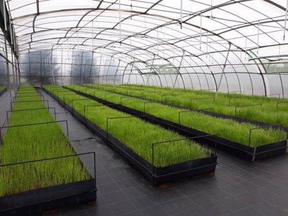 La Comunidad donará a 500 agricultores 451.000 plantones hortícolas por su esfuerzo estos días