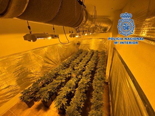 Plantación de marihuana desmantelada por la Policía Nacional en la provincia de Granada