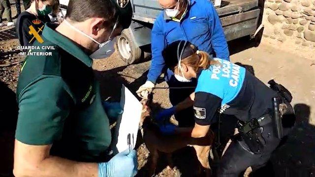 Agentes de la  Guardia Civil y de la Policía Local atendiendo a uno de los perros maltratados