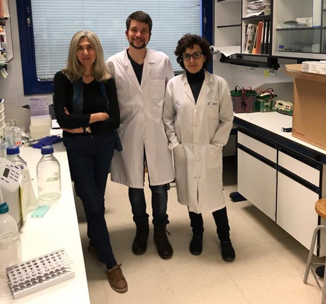 "Investigadores de la UAM descubren un polímero natural ""muy eficaz"" 'in vitro' frente a cinco virus diferentes"