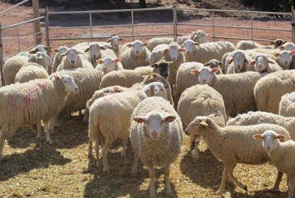 La Unió estima unas pérdidas directas iniciales en el sector agropecuario valenciano de 65 millones por el coronavirus
