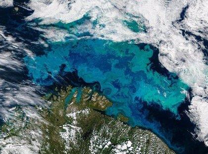 Corrientes reforzadas extienden al Ártico un alga de aguas templadas