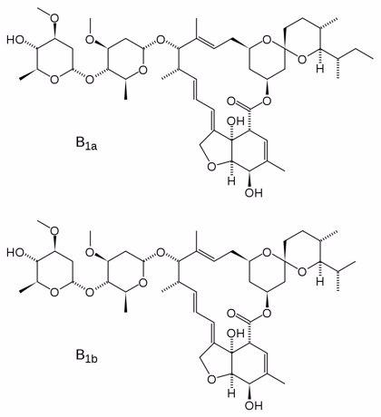 La UA trabaja en la efectividad del uso del antiparásito ivermectina contra el coronavirus