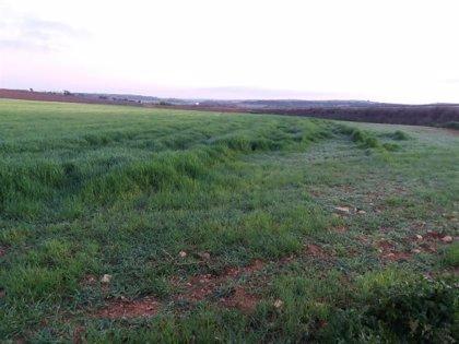 Asaja C-LM pide medidas especiales ante el incremento de conejos en las explotaciones agrarias