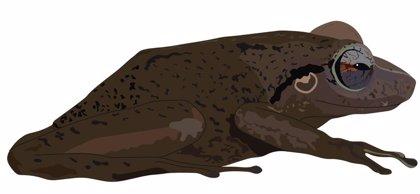 La rana coquí ya habitaba Puerto Rico hace 29 millones de años