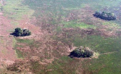 En la Amazonía se cultivaron plantas en 'islas' hace 10.000 años