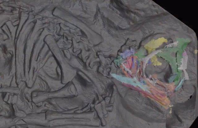 Un sincrotrón revela al detalle cráneos de embriones de dinosaurio