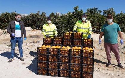 Coronavirus.- Cemex dona 400 kilos de mandarinas para ayudar a las personas en riesgo de exclusión de Alicante