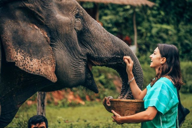 Mujer alimentando a un elefante,