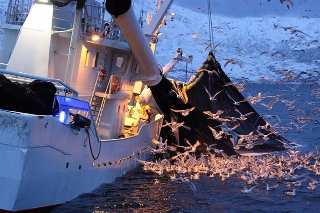 Np Científicos A Bordo De Barco Pesqueros Litoral Mediterráneo De Cádiz Y Málaga
