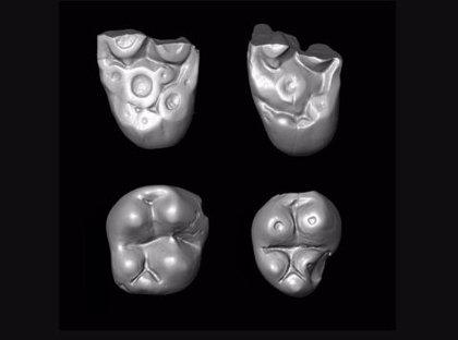 Fósiles de Perú acreditan que los monos cruzaron el Atlántico desde África