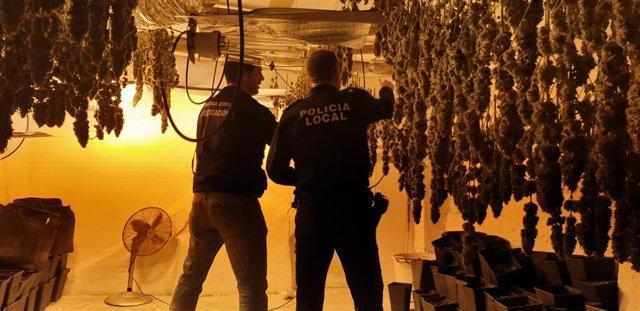 Operación con tres plantaciones de marihuana desmanteladas en Santa Fe (Granada)