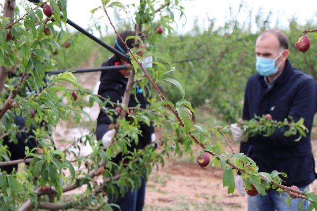 Visita a los cultivos dañados por las tormentas en Entrerríos (Badajoz)