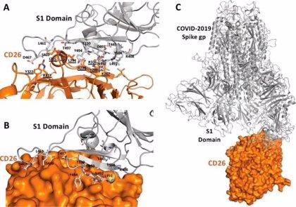 Investigador sugiere que un fármaco contra la diabetes tipo 2 podría ser un tratamiento frente al Covid-19