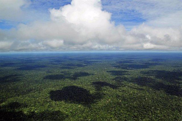 Vista aérea de la Amazonia, cerca de Manaus, la capital del estado de Amazonas, en Brasil
