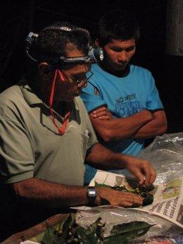 Investigadores analizan la botánica de la selva tropical del Amazonas.