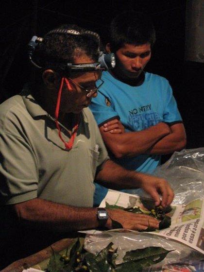 Científicos reclaman conocer el Amazonas porque las zonas tropicales pueden ser aliadas contra el Covid-19