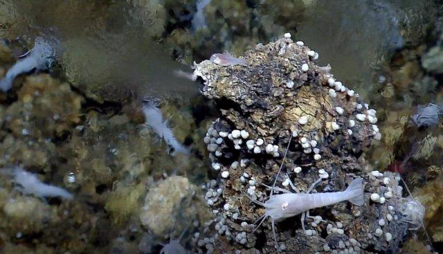 Respiradero hidrotermal de fondo marino como el simulado en el JPL