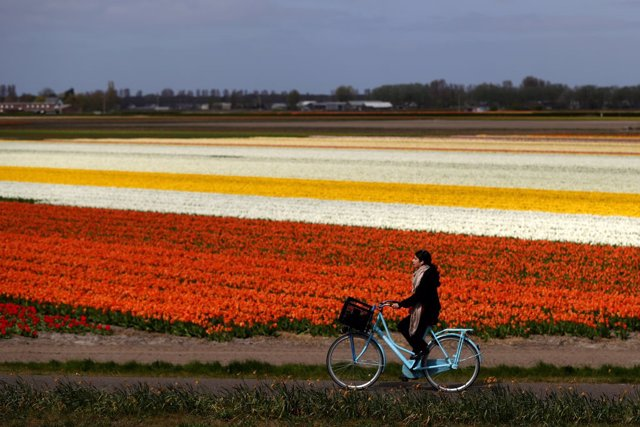 Coronavirus.- Países Bajos sobrepasa los 30.000 contagios pero continúa reducien