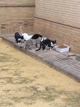 Una colonia de gatos callejeros se alimenta.