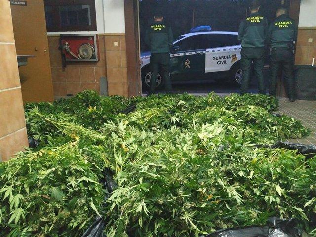 Operación contra el cultivo de marihuana en la provincia de Granada, en imagen de archivo
