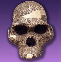 La vía cerebral del lenguaje se remonta a hace 25 millones de años