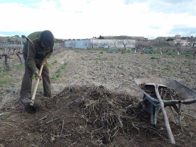 Coronavirus.- El Institut Agrícola de Sant Isidre pide a Planas ampliar movilida