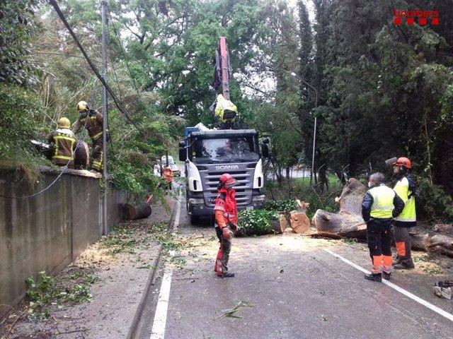 Actuacions dels Bombers per caigudes d'arbres a Catalunya