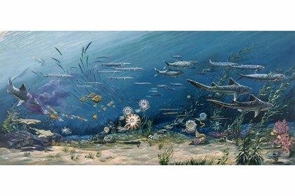 La biodiversidad oceánica es constante hace cientos de millones de años