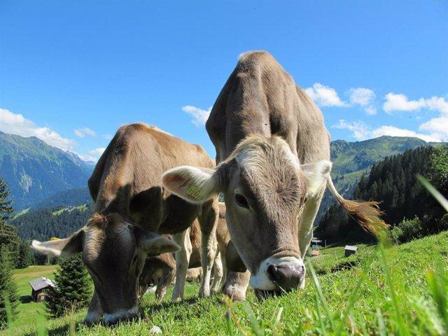 El consumo de lacteos en la Europa prehistórica despegó por el norte