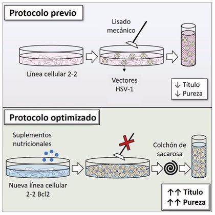 Investigadores españoles avanzan en terapia génica para enfermedades neurológicas hereditarias