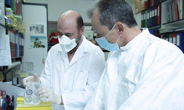 Investigadores del CNB ensayarán con animales el candidato a vacuna frente a COVID la próxima semana