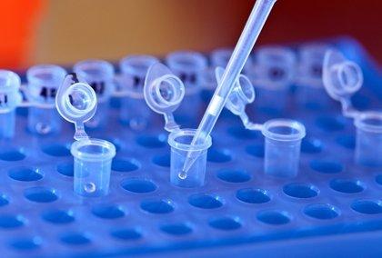 Los científicos se acercan al tratamiento para la distrofia miotónica