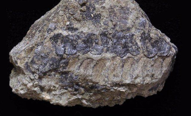 Nueva planta fósil capturó una instantánea de la evolución