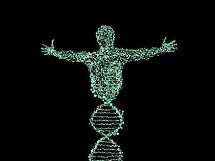 Mutaciones genéticas ayudan a identificar el riesgo de aneurisma aórtico