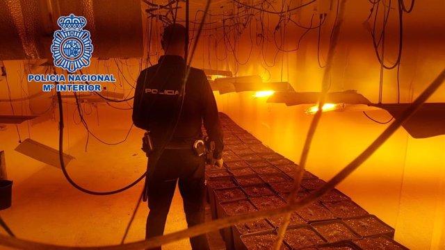 Un agente de Policía Nacional en un cultivo de marihuana de Almería