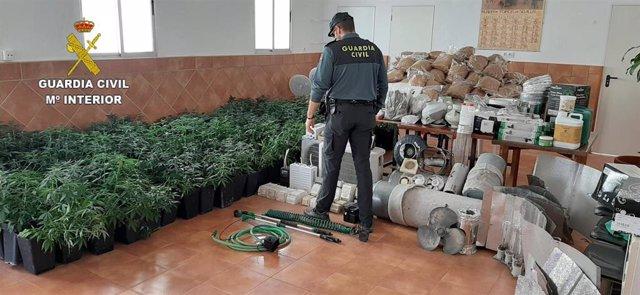 Plantación de marihuana localizada en Escacena del Campo.