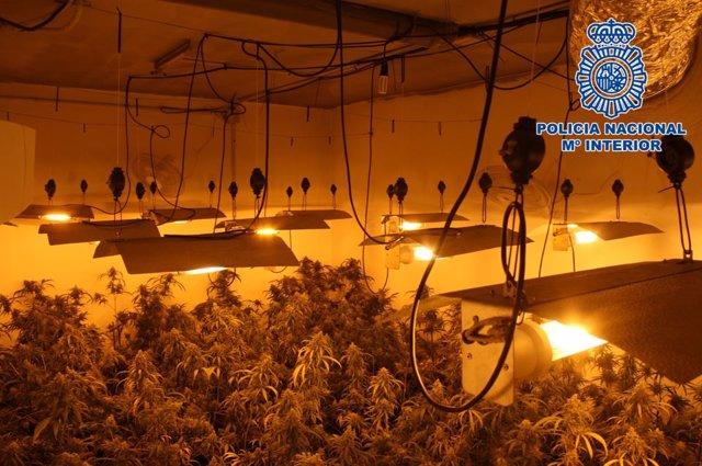 Granada.- Sucesos.- Detenidos los presuntos dueños de dos cultivos de marihuana