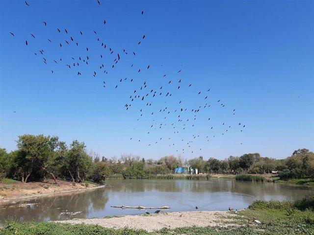 Laguna de Fuente del Rey