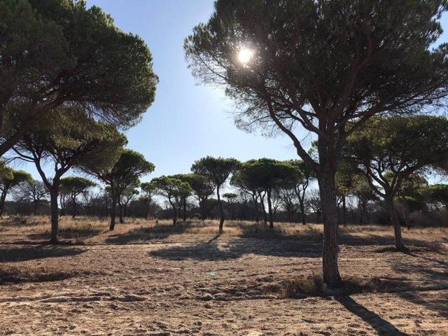Imagen de Doñana.